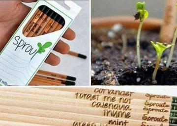 Vous serez incapable de jeter ces crayons trop courts pour être utilisés! Puisqu'ils deviendront de magnifiques plantes!