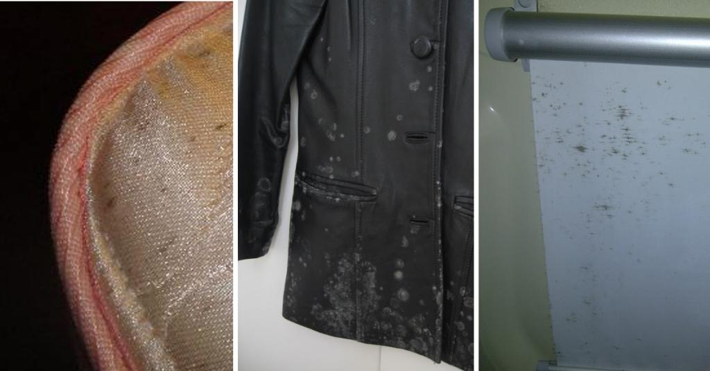 Nettoyage veste cuir moisi