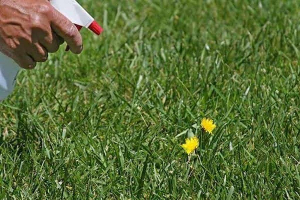 si vous utilisez du vinaigre dans votre jardin, ces 13 miracles se