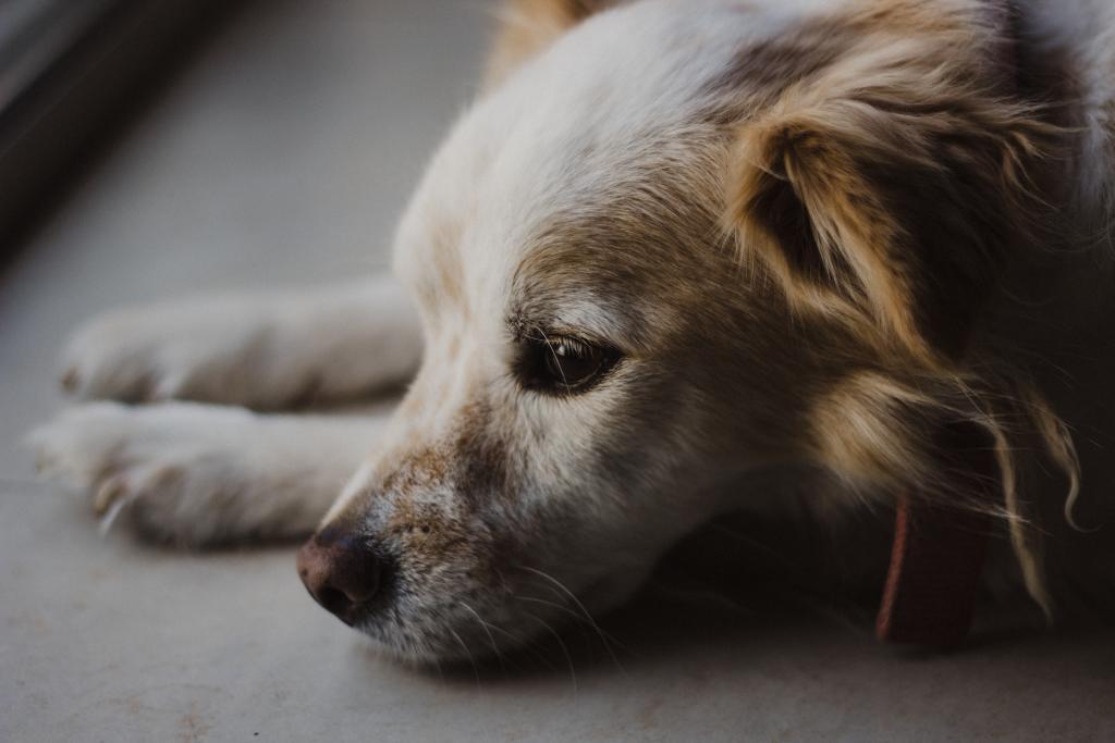 Un vétérinaire partage une astuce efficace pour se débarrasser des puces qui se trouvent sur votre animal de compagnie