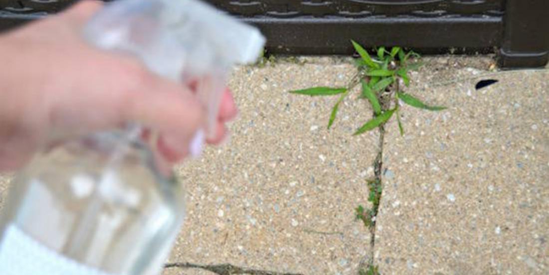 Les mauvaises herbes détestent ce désherbant naturel prêt en seulement 2 minutes!