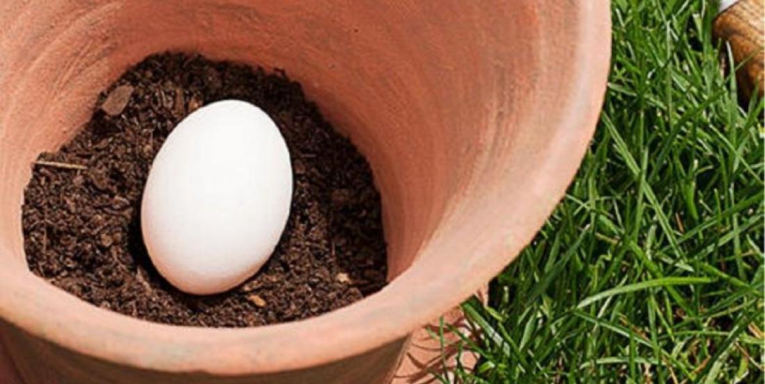 Plantez un oeuf cru dans un pot à fleurs et voici l'incroyable effet qu'il aura sur votre jardin!