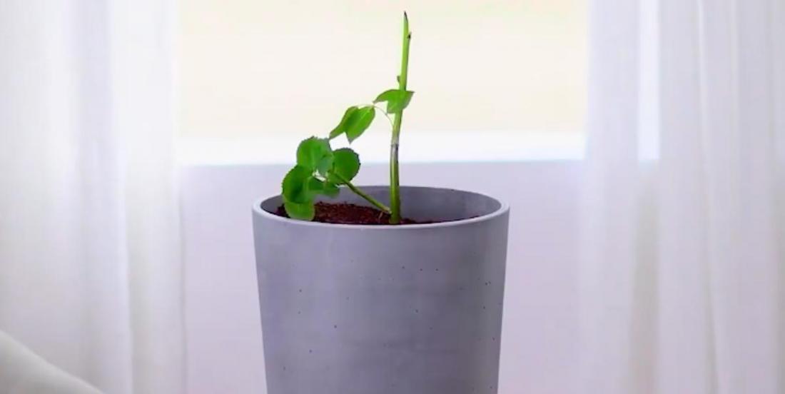 Culture des plantes: 6 astuces intelligentes!