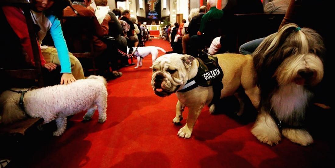 Un cinéma pour humains et chiens avec vin à volonté!