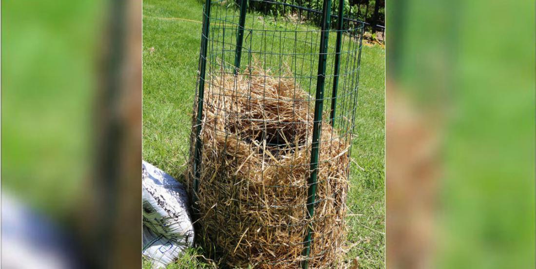 Vous pourrez cesser d'acheter des pommes de terre! Voici comment les cultiver facilement, dans une tour!