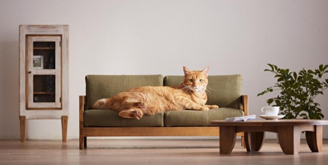 Une compagnie japonaise crée une gamme de meubles miniatures pour chats