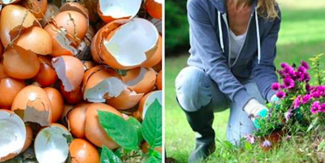 8 usages pour vos coquilles d'oeufs, qu'il ne faudra plus jamais jeter