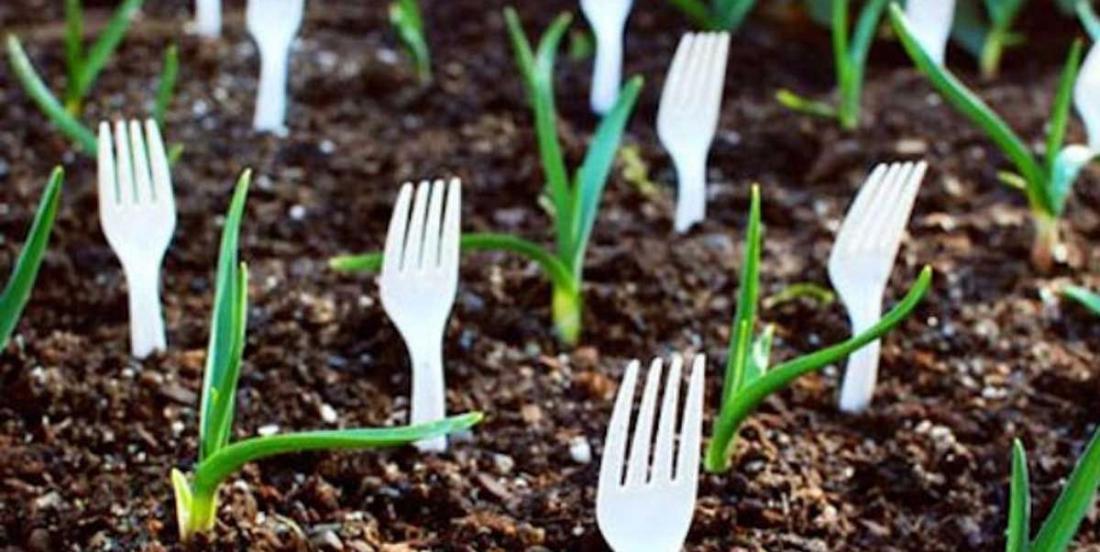 Cessez de jeter les fourchettes en plastique! Voici 6 bonnes raisons pour lesquelles vous devriez plutôt les planter!