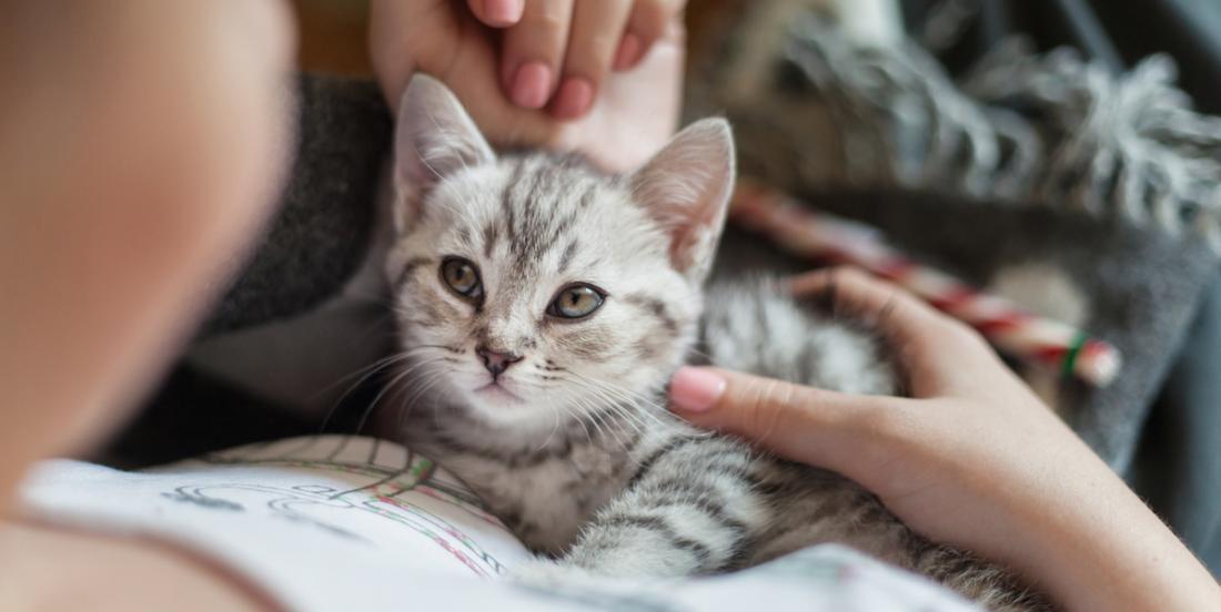 10 façons qu'a votre chat de vous dire qu'il vous aime!