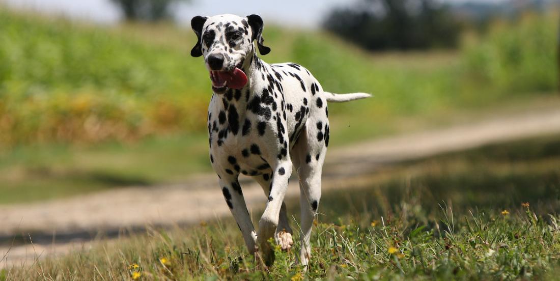 Votre chien a tendance à fuguer? Voici des conseils et des solutions!