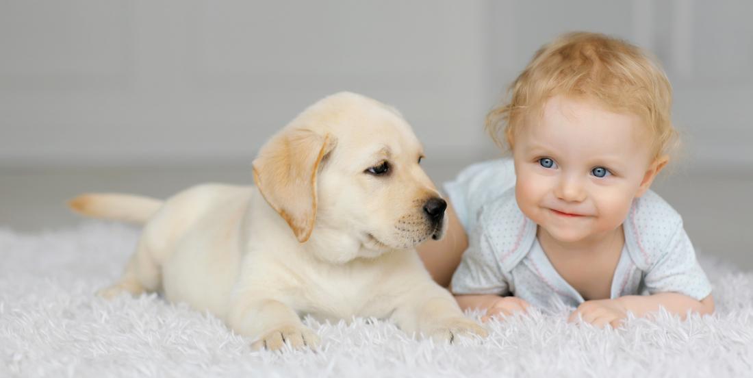 15 races de chiens qui sont extrêmement fidèles à leurs amis humains!
