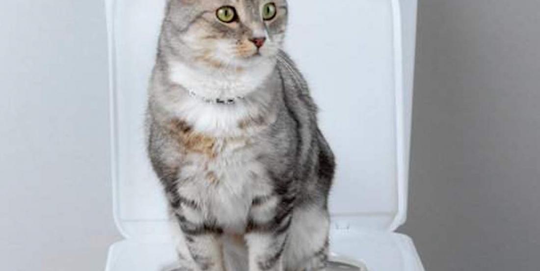 Voici comment apprendre à votre chat à aller aux toilettes
