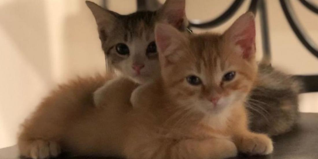 Une société adopte deux chatons pour aider le moral des employés du bureau
