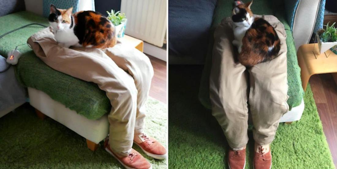 Ils ont trouvé une idée pour que leur chat ne les dérange plus pendant leur télétravail