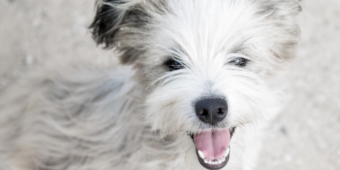 7 astuces à connaître si vous avez un chien