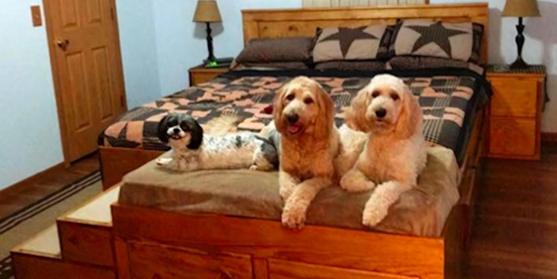 Une entreprise fabrique des cadres de lit en bois sur mesure avec lits pour animaux intégrés