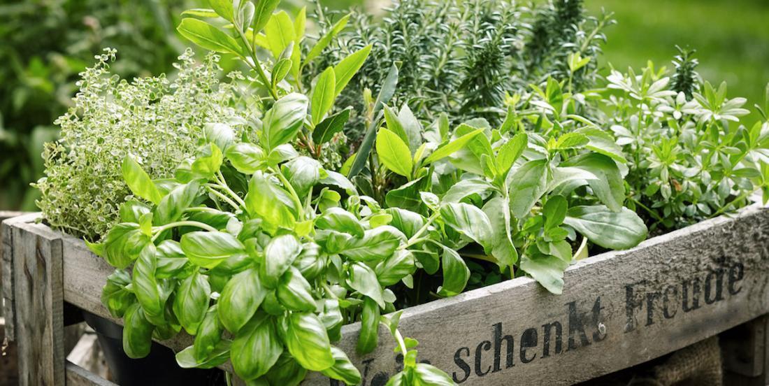 5 façons de conserver les fines herbes
