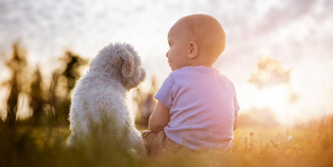 Les experts disent que les enfants qui ont des chiens sont plus heureux et ont plus de succès