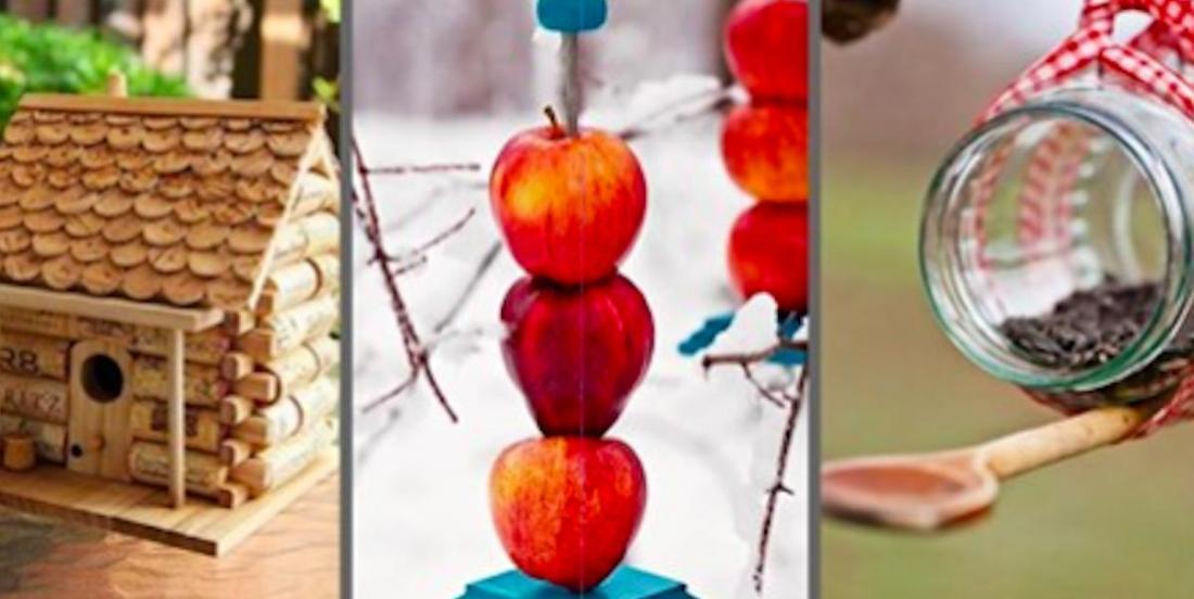 20 suggestions de mangeoires pour les petits animaux et les oiseaux