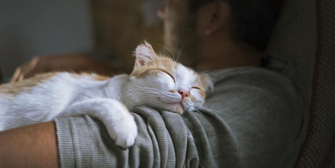 2 vétérinaires expliquent pourquoi votre chat vous a choisi comme lieu de sommeil le plus confortable