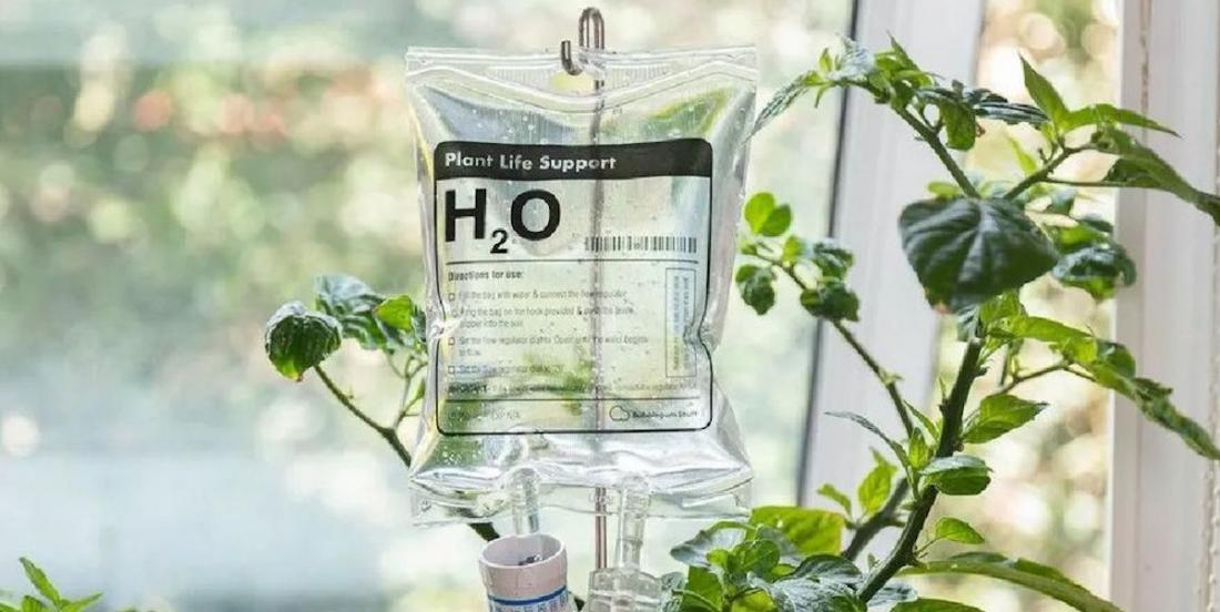 Gardez vos plantes en vie grâce à cette poche de perfusion!