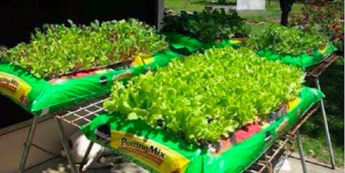Des gens cultivent des jardins dans des sacs de terre et c'est génial!