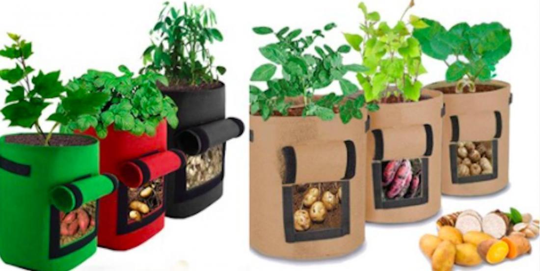 Le saviez-vous? Il est possible de cultiver des légumes dans des sacs!