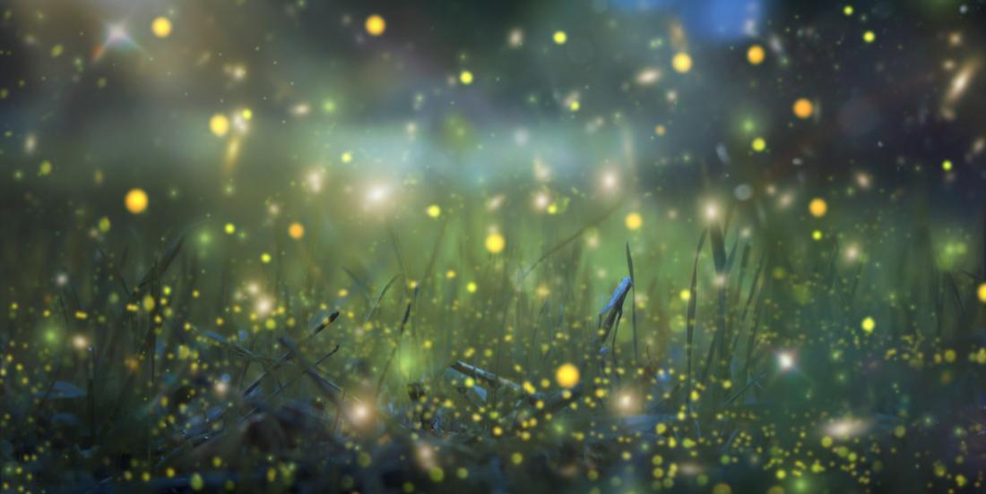 6 façons d'attirer les lucioles dans votre jardin