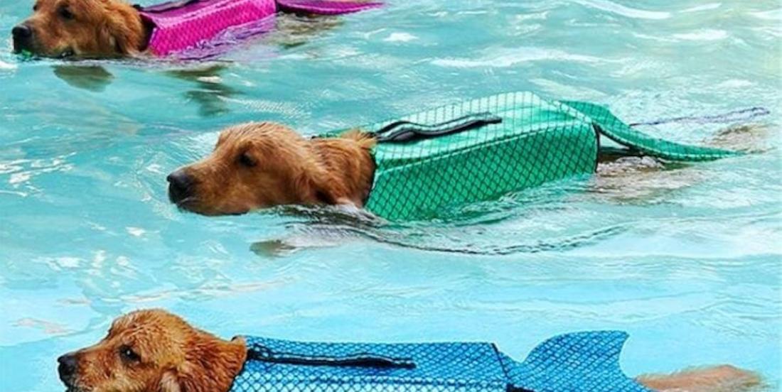Transformez votre chien en sirène avec ce gilet de sauvetage scintillant