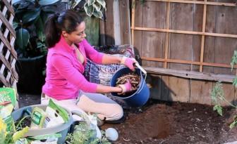 Elle saupoudre toujours ses plants avec cet ingrédient! Ils produisent 2 fois plus et les parasites se tiennent loin de son jardin!