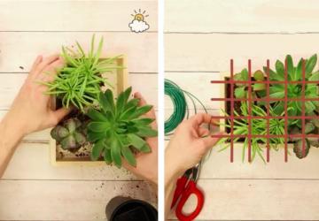 Il met des plantes dans une boite et fait une grille avec du fil à jardinage! Je vais tellement m'en faire un!!
