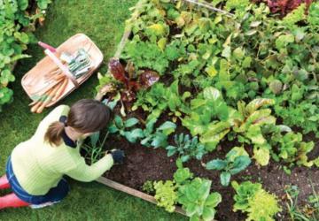 Ça fait des années qu'elle n'achète plus d'engrais pour ses plantes: sa recette est bien meilleure!