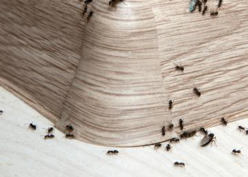 Débarrassez-vous des fourmis autour et dans la maison en une seule nuit!