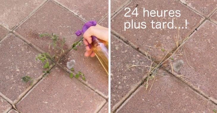 prparez un dsherbant naturel en 5 minutes qui dtruira les mauvaises herbes en 24 h - Comment Faire Du Desherbant Avec Du Vinaigre Blanc