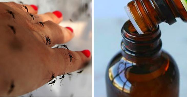 Si les moustiques ne vous laissent jamais tranquille, utilisez ces répulsifs plus efficaces que les produits chimiques!