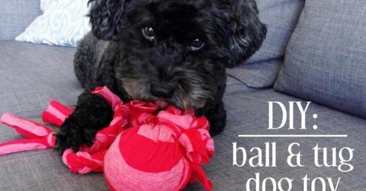 Un jouet pour petit chien fait maison!