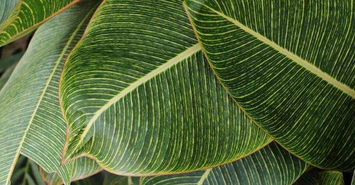 Ces 6 plantes vous aideront à garder votre maison naturellement fraîche