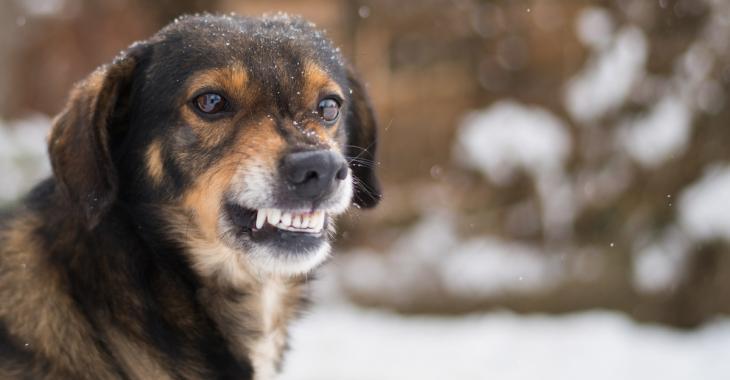 Tous les parents devraient apprendre à leurs enfants à bien réagir en présence d'un chien agressif