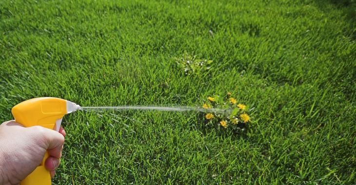 12 façons naturelles de se débarrasser des mauvaises herbes