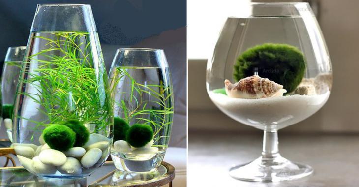 plante aquatique vase