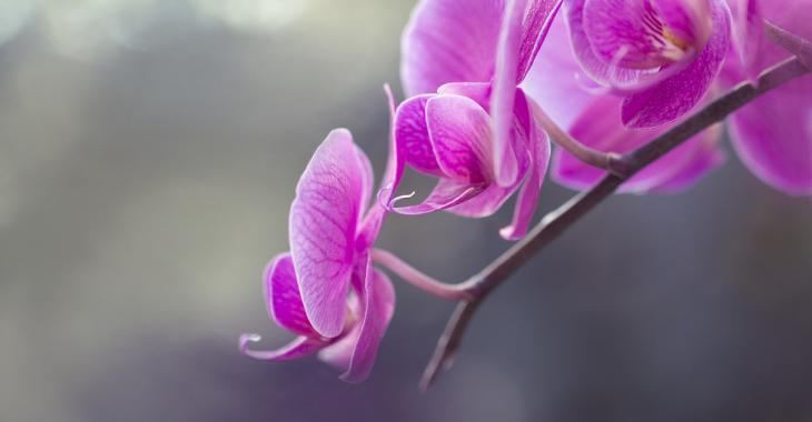 Tout ce qu'il faut savoir pour prendre soin d'une orchidée