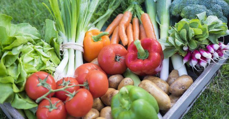 Pour une récolte abondante, soyez aux petits oignons avec vos plants!