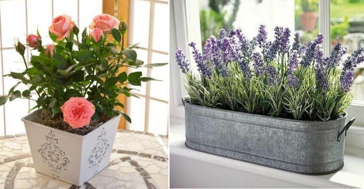 15 plantes et fleurs qui apportent plus de positif et de bonheur dans votre maison