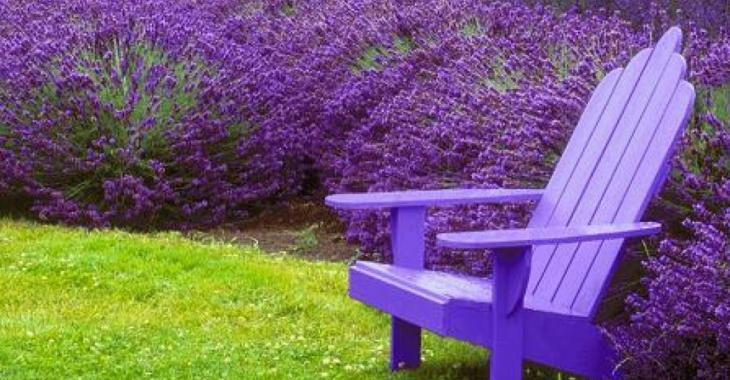 Ces 7 plantes vous protègeront des moustiques sur votre terrasse et dans votre jardin