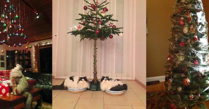 24 photos qui montrent les mesures prises par des propriétaires d'animaux pour protéger leurs sapins de Noël!