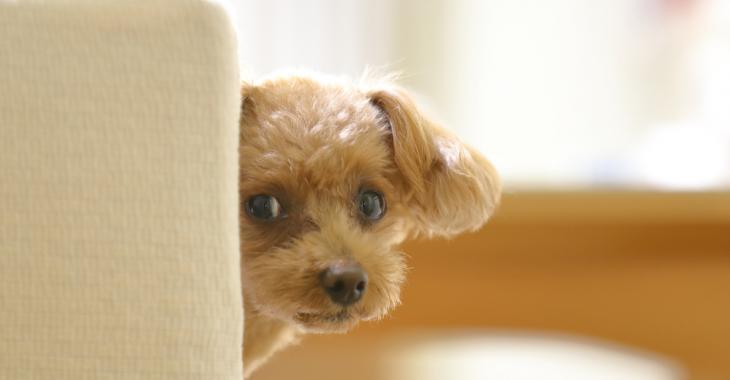 25 faits sur les chiens que vous ne connaissez probablement pas