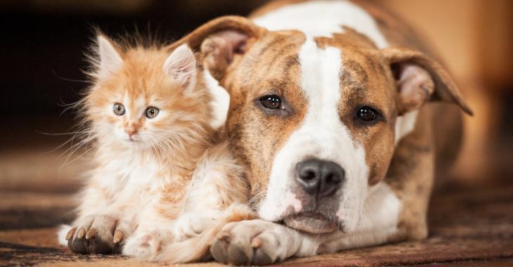 Les animaux de compagnie savent quand nous avons besoin de support émotionnel
