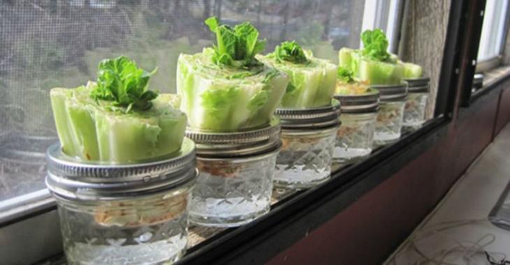 10 légumes et herbes à faire pousser encore et encore à la maison