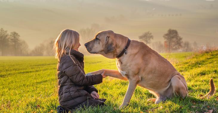 5 bienfaits que votre chien a sur votre santé mentale