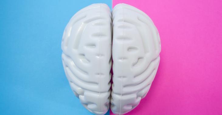 Selon des scientifiques, le cerveau des femmes serait de 3 ans plus jeune que celui des hommes